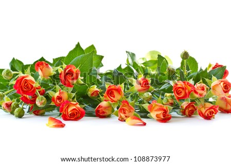 bouquet of roses on a white background - stock photo