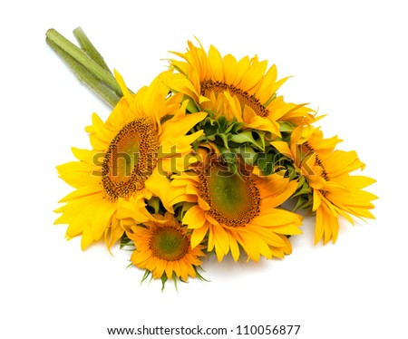bouquet of sunflowers isolated on white background