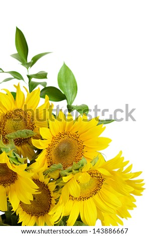 Bouquet of sunflowers on white background