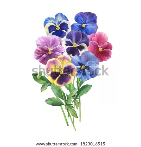 Bouquet of the blue garden tricolor pansy flower (Viola tricolor, viola arvensis, heartsease, violet, kiss-me-quick) Hand drawn botanical watercolor painting illustration isolated on white background Сток-фото ©