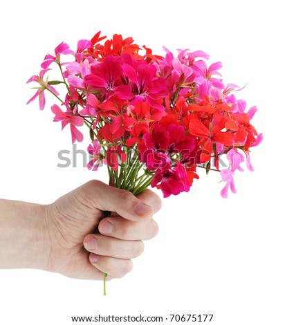 Bouquet of the pink colors of geranium in the hand
