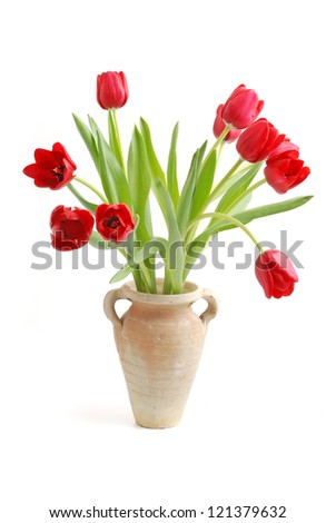 Bouquet of tulip on a white background.