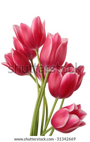 Bouquet of tulip on a white background Clipping path