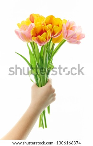 bouquet of tulips in hand on white background close-up. Concept 8 March, international women's day. #1306166374