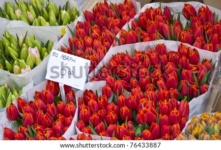 Bouquet of tulips in the flower market in Amsterdam. - stock photo