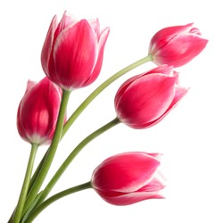 Bouquet of tulips on white background