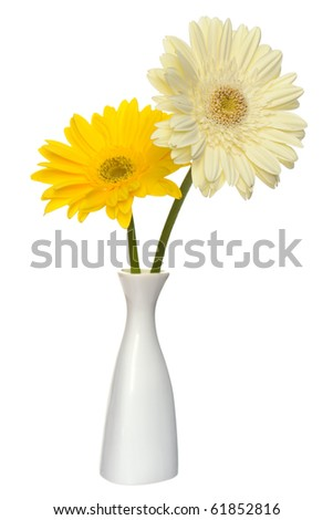 Bouquet of two daisy-gerbera flowers in white china vase  isolated on a white background