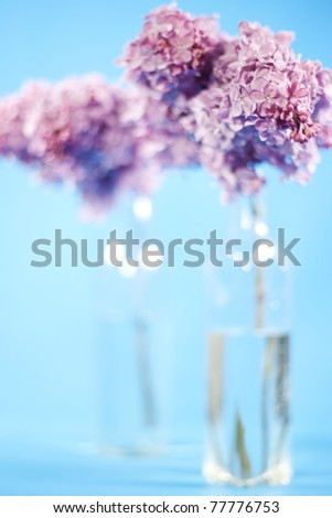 Bouquet of violet lilac in a vase on blue background