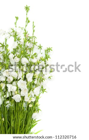 bouquet of white bells isolated on white