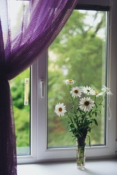 Bouquet of white  chamomile flowers on the plastic window, purple curtain, diffused light.