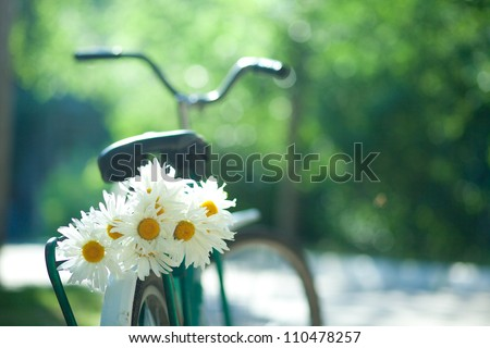 Bouquet of white chamomiles on the trunk of an old bicycle. Close-up - stock photo