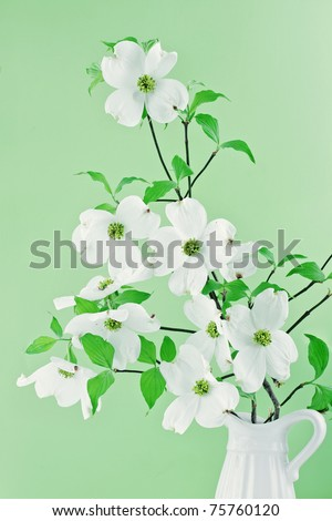 Bouquet of white Dogwood blossoms against a green background.