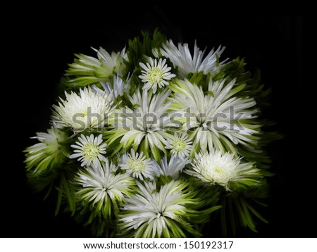 Flower Bouquet Black And White Bouquet of White Flowers on a