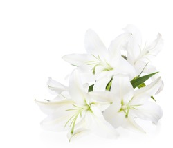 Bouquet of white lilies  ( isolated on white background).