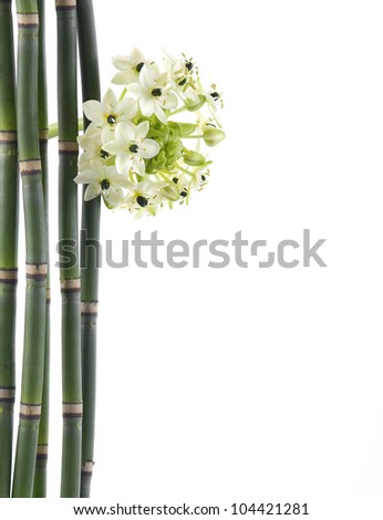 bouquet of white orchid flowers with thin bamboo grove-close up