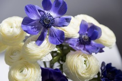 Bouquet of white ranunculus and blue anemone in the vase on a white table. Shadow
