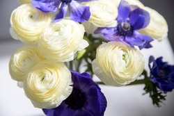 Bouquet of white ranunculus and blue anemone on a white background.