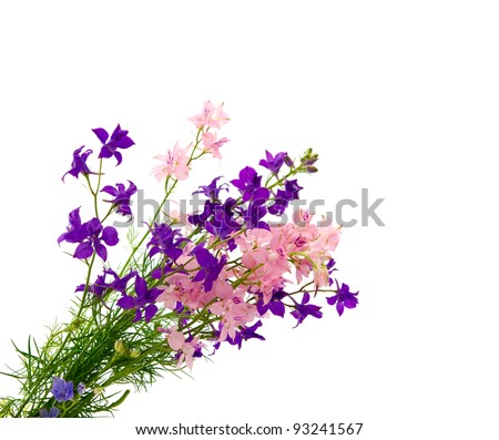 bouquet of wild flowers isolated on white background