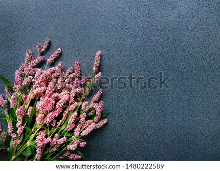 Bouquet of wild pink flowers on a dark gray granite background. Annual herb, Persicaria maculosa, Polygonum, buckwheat