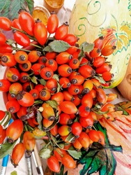 Bouquet of wild rose and pumpkin berries. Autumn harvest.