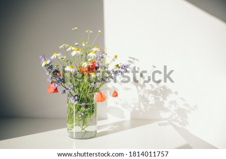 Bouquet of wildflowers in a small glass vase on the white table. Poppies, chamomiles, cornflowers, green grass. Summer photo. Contrast shadows on the white wall. Country style.