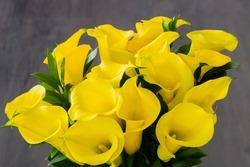 Bouquet of yellow Calla lilies (Zantedeschia) over dark wooden background
