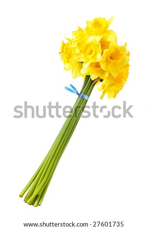 Bouquet of yellow daffodils isolated over the white background