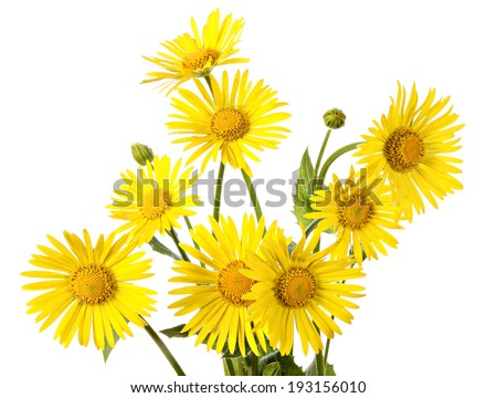 Bouquet of yellow flowers isolated on a white background