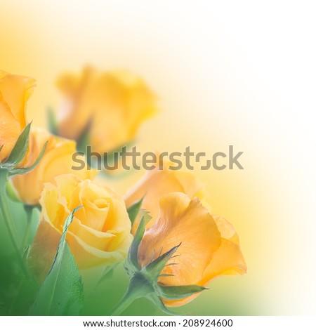 Bouquet of yellow roses, floral background
