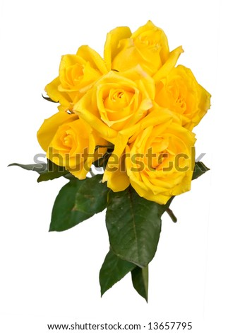 white and yellow rose bouquets. stock photo : ouquet of yellow roses on white