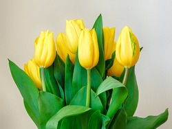 Bouquet of yellow tulips in a glass vase
