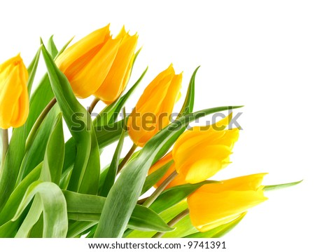 Bouquet of yellow tulips in the bottom left corner.