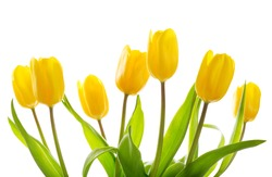 Bouquet of yellow tulips isolated on white background
