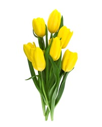 Bouquet of yellow tulips isolated on white background with clipping path. Valentine's Day and Mother's Day background. Top view.