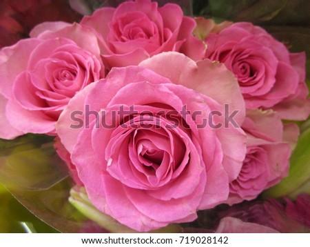 Bouquet roses #719028142