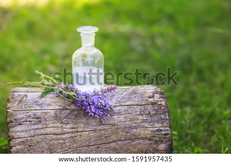 bouquet Salvia pratensis, meadow clary near bottle of medicine on stump in forest on background of green grass. Collection of herbs in season. Medicines from medicinal pl