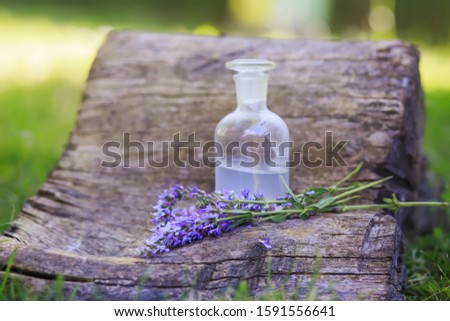 bouquet Salvia pratensis, meadow clary or meadow sage purple flowers near bottle of medicine on stump in forest on background. Collection of herbs in season. Medicines from medicinal plants.
