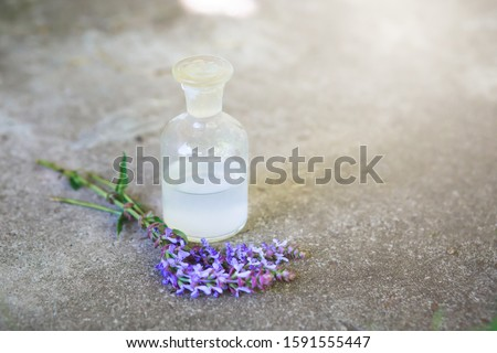 bouquet Salvia pratensis, meadow clary or meadow sage purple flowers near bottle of medicine on a concrete background. Collection of herbs in season. Medicines from medicinal plants.