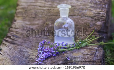 bouquet Salvia pratensis, meadow sage purple flowers near bottle of medicine on stump in forest on background of green grass. Collection of herbs in season. Medicines from medicinal pl