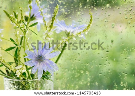 bouquet with flowers of chicory ...