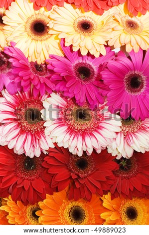 Bouquet with various beautiful flowers - stock photo