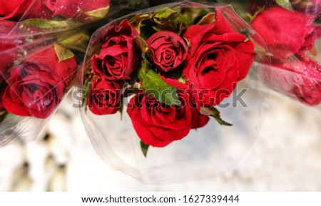 Bouquets of fresh red roses with plastic wrapper. Floral design, arrangement, floristry, flower production, or any celebrating of special occasion such as wedding, Valentines or Mother's Day concepts.
