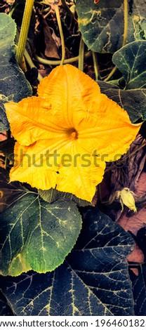 Bourgeon yellow flower beautiful flower  Photo stock ©