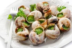 bourguignonne snail au gratin on withe