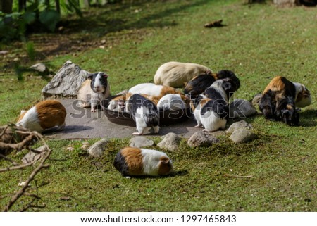 Bowl full of  gerbils on a grass area for feeding