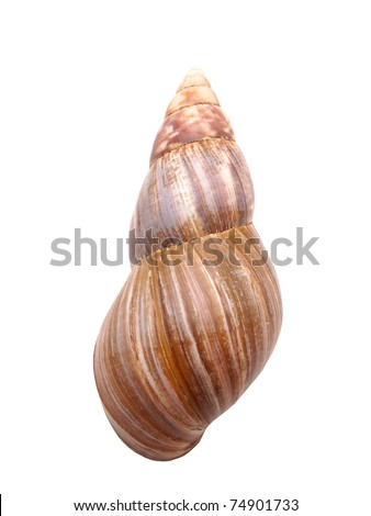 Bowl of a snail on a white background