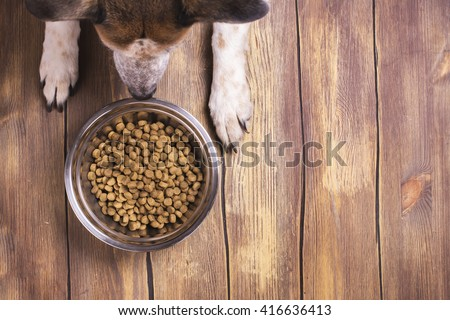 Bowl of dry kibble dog food and dog's paws and neb over grunge wooden floor