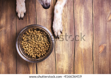 Bowl of dry kibble dog food and dog\'s paws and neb over grunge wooden floor