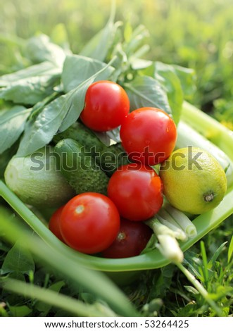 Bowl of fresh organic home grown vegetables on green grass. Shallow DOF, focus on tomatoes.