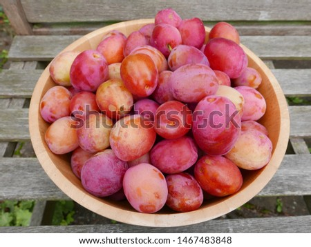 Bowl of freshly picked plums outdoors on a wooden bench